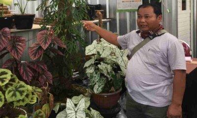 Pedagang Bunga Hias Desa Sidomulyo Batu Turun Omzet